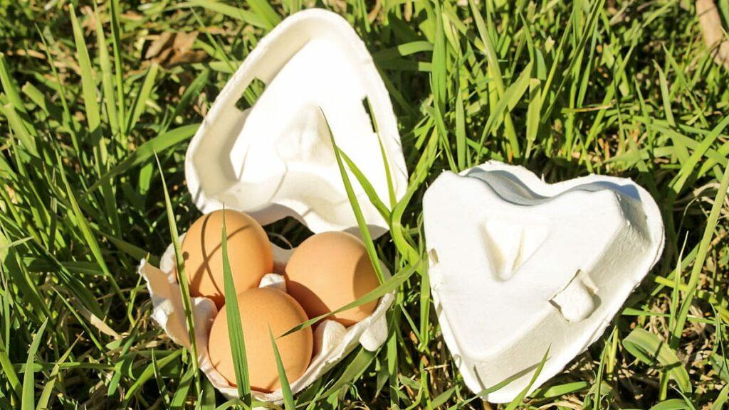 Bio-Eier vom Lienlbauer, Ramsau, Steiermark